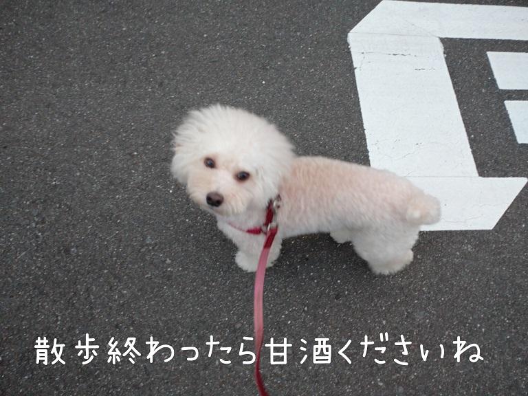 f:id:kotaro-dog:20210912213534j:plain
