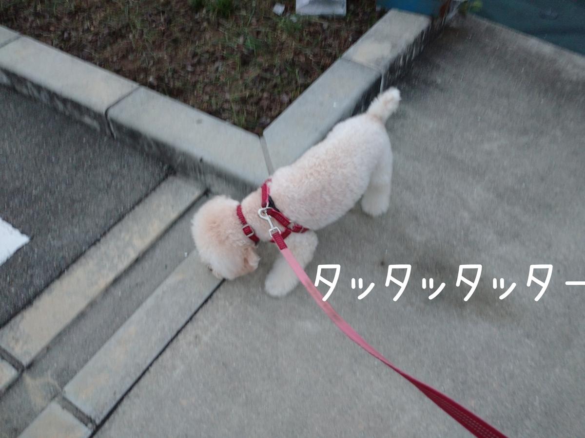 f:id:kotaro-dog:20210912221108j:plain