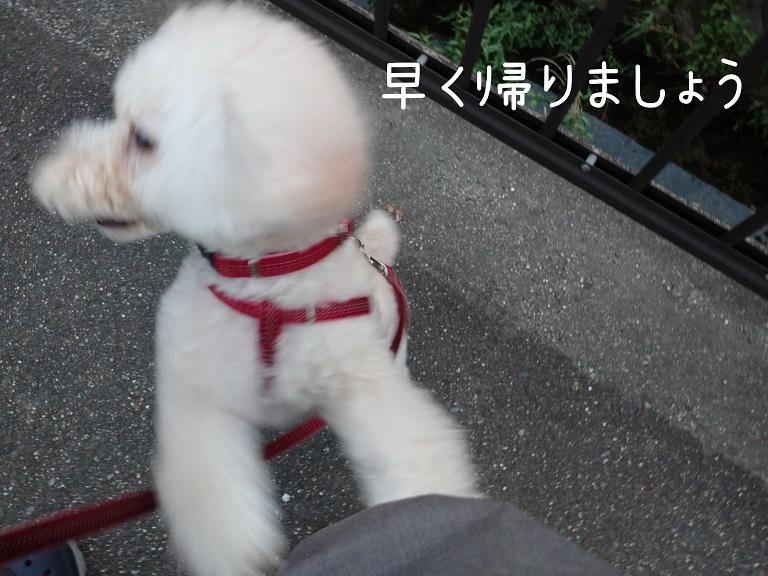 f:id:kotaro-dog:20210912221337j:plain