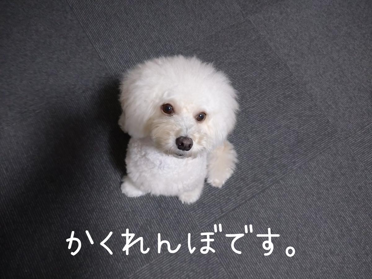 f:id:kotaro-dog:20210914235800j:plain