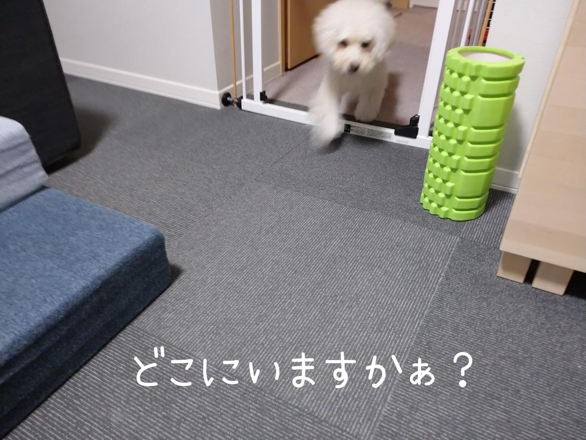 f:id:kotaro-dog:20210915000513j:plain