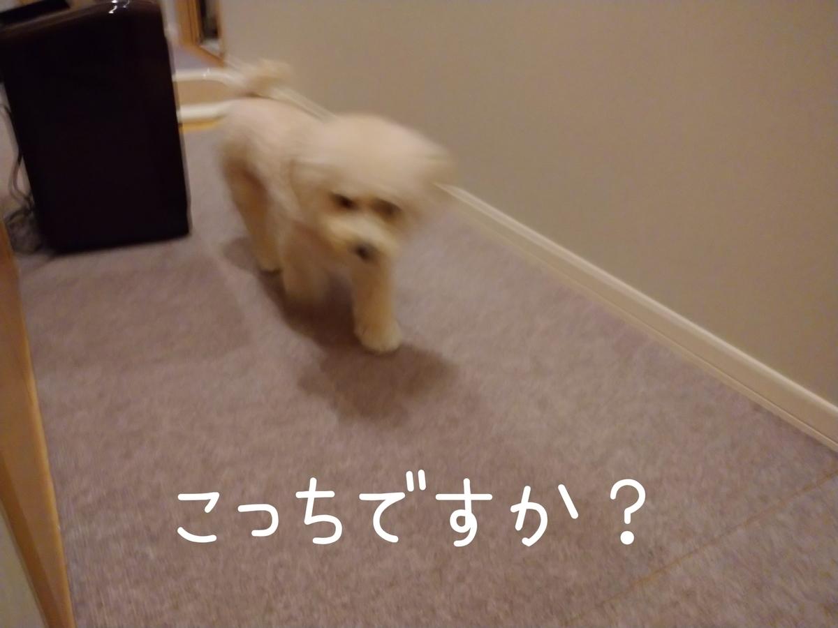 f:id:kotaro-dog:20210915000544j:plain