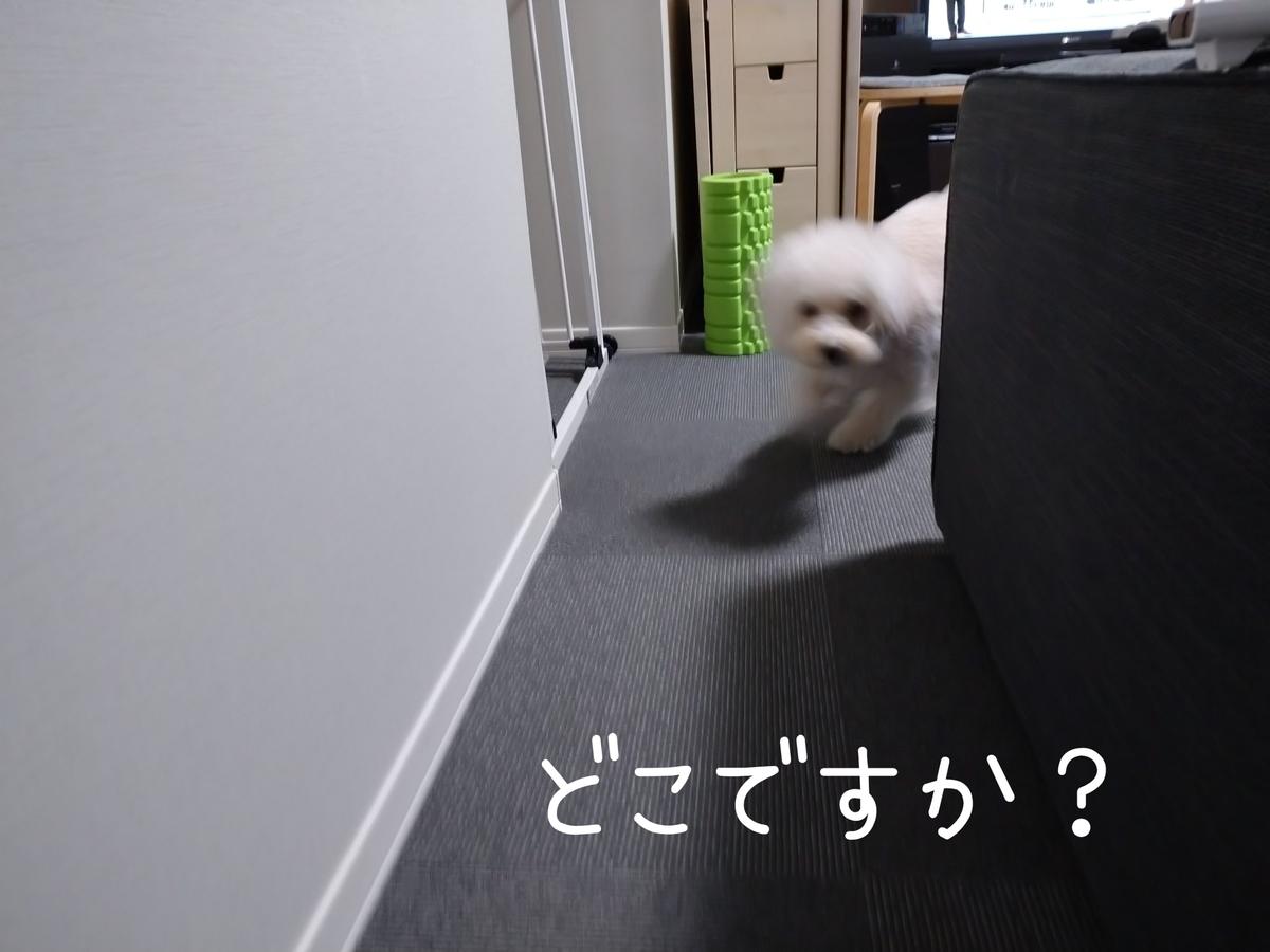 f:id:kotaro-dog:20210915000613j:plain