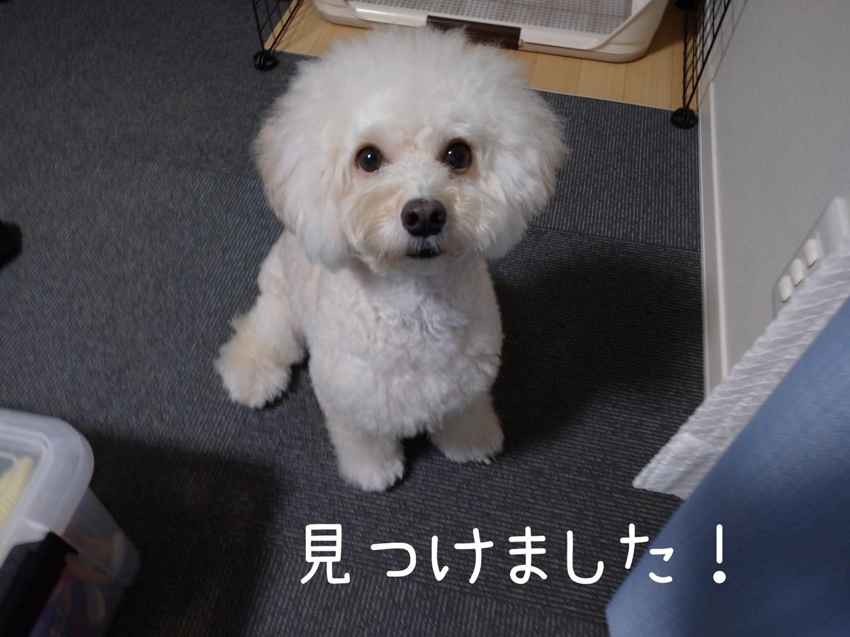 f:id:kotaro-dog:20210915000648j:plain