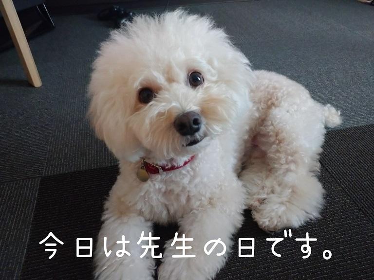 f:id:kotaro-dog:20210918194922j:plain