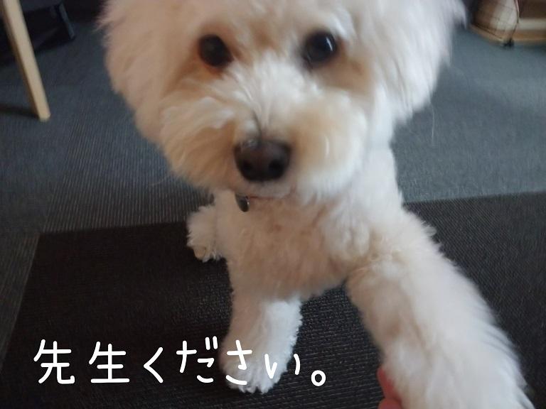 f:id:kotaro-dog:20210918194945j:plain