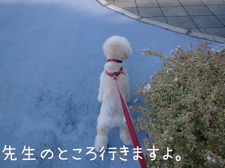 f:id:kotaro-dog:20210918195235j:plain