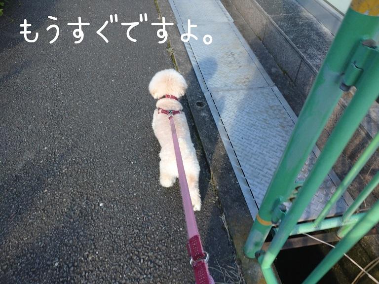 f:id:kotaro-dog:20210918195405j:plain