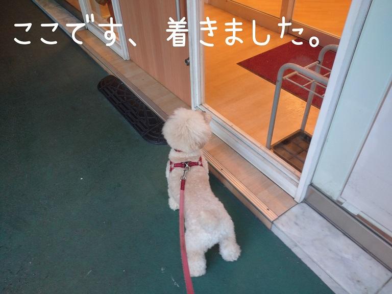 f:id:kotaro-dog:20210918195424j:plain