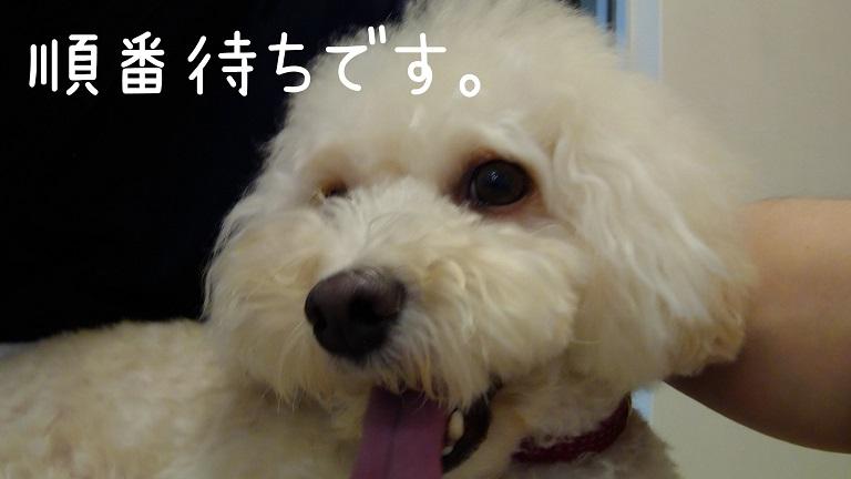 f:id:kotaro-dog:20210918195602j:plain