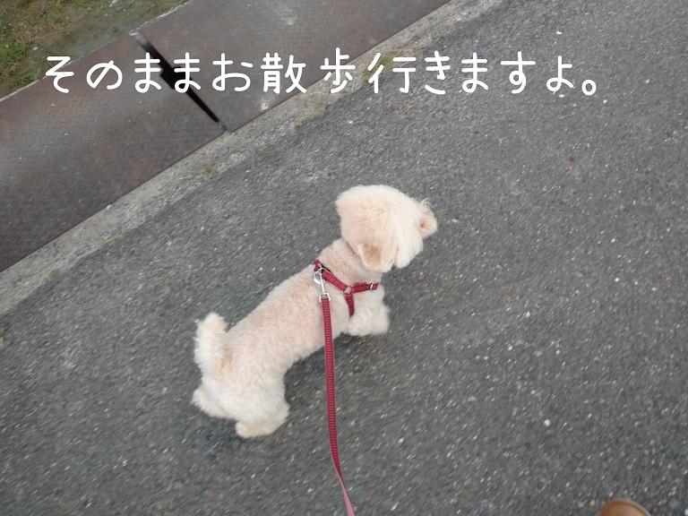 f:id:kotaro-dog:20210918200316j:plain