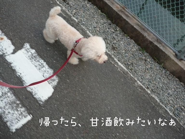 f:id:kotaro-dog:20210918200405j:plain