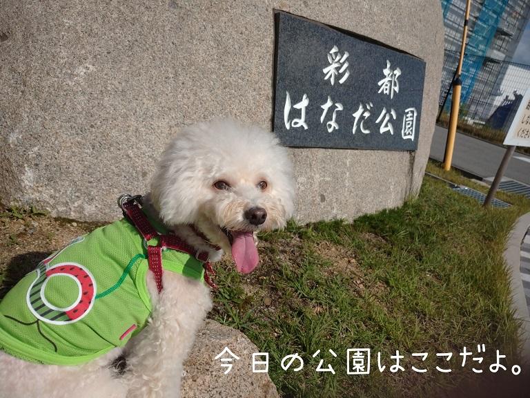 f:id:kotaro-dog:20210919175606j:plain