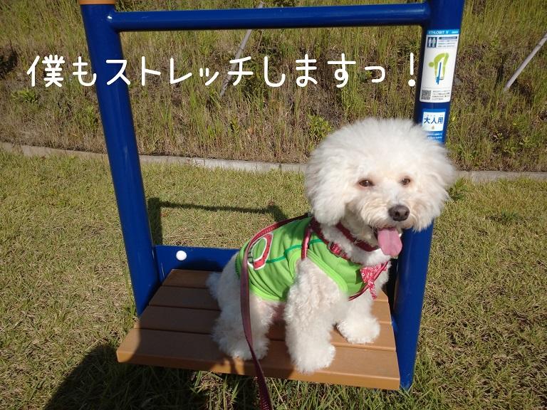 f:id:kotaro-dog:20210919190047j:plain