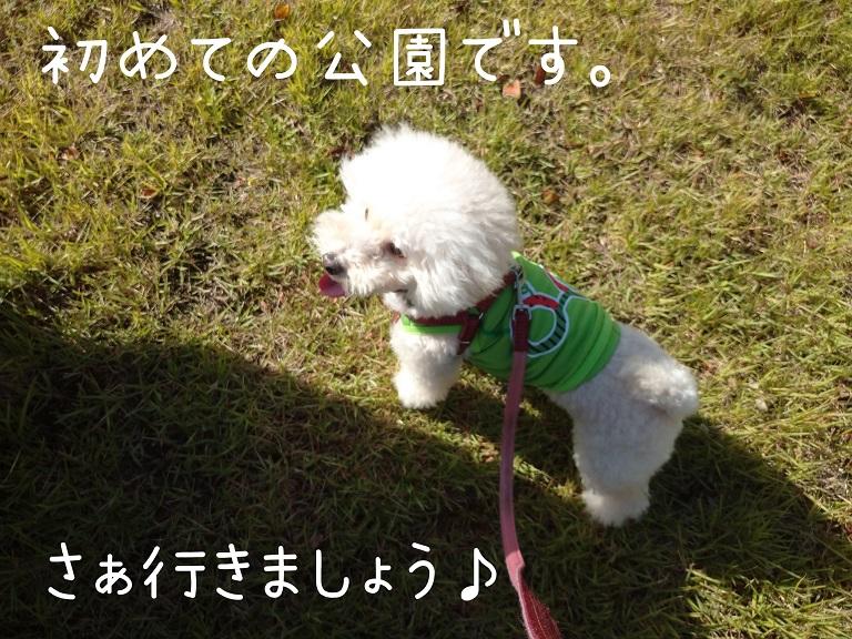 f:id:kotaro-dog:20210919190236j:plain