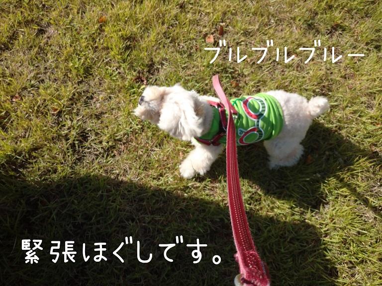 f:id:kotaro-dog:20210919190321j:plain