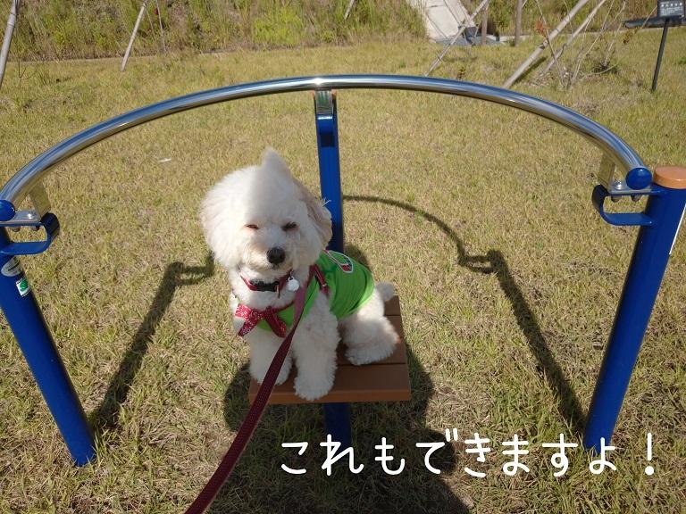f:id:kotaro-dog:20210919190431j:plain