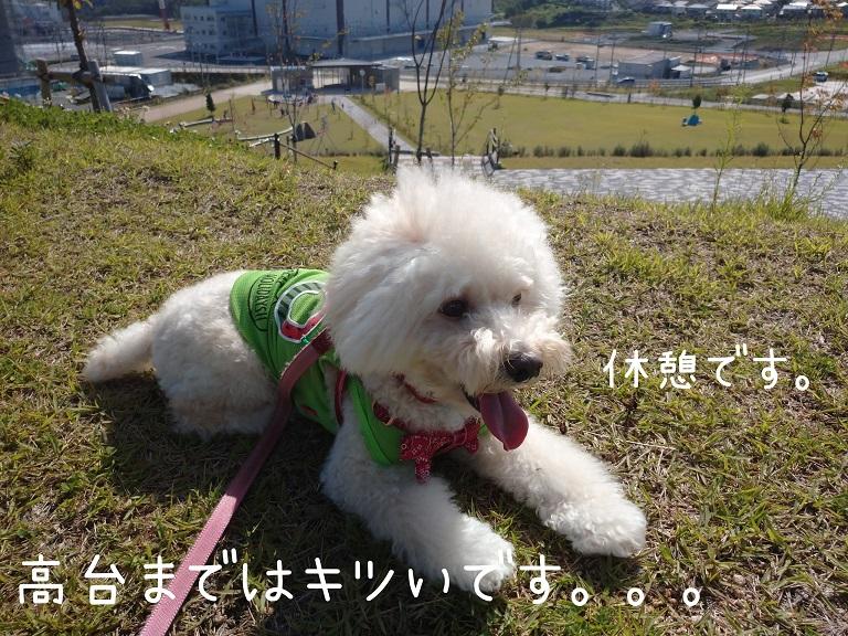 f:id:kotaro-dog:20210919191226j:plain