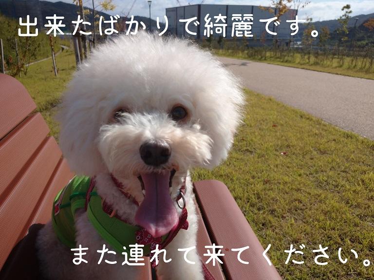 f:id:kotaro-dog:20210919192424j:plain