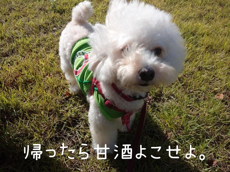 f:id:kotaro-dog:20210919192445j:plain