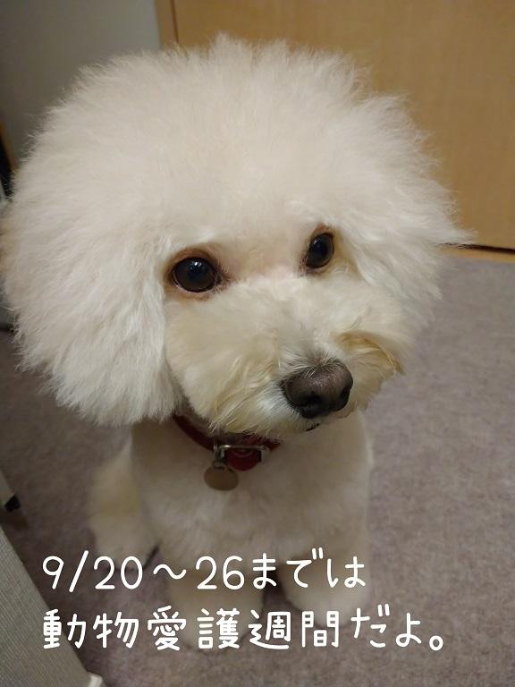 f:id:kotaro-dog:20210920222354j:plain