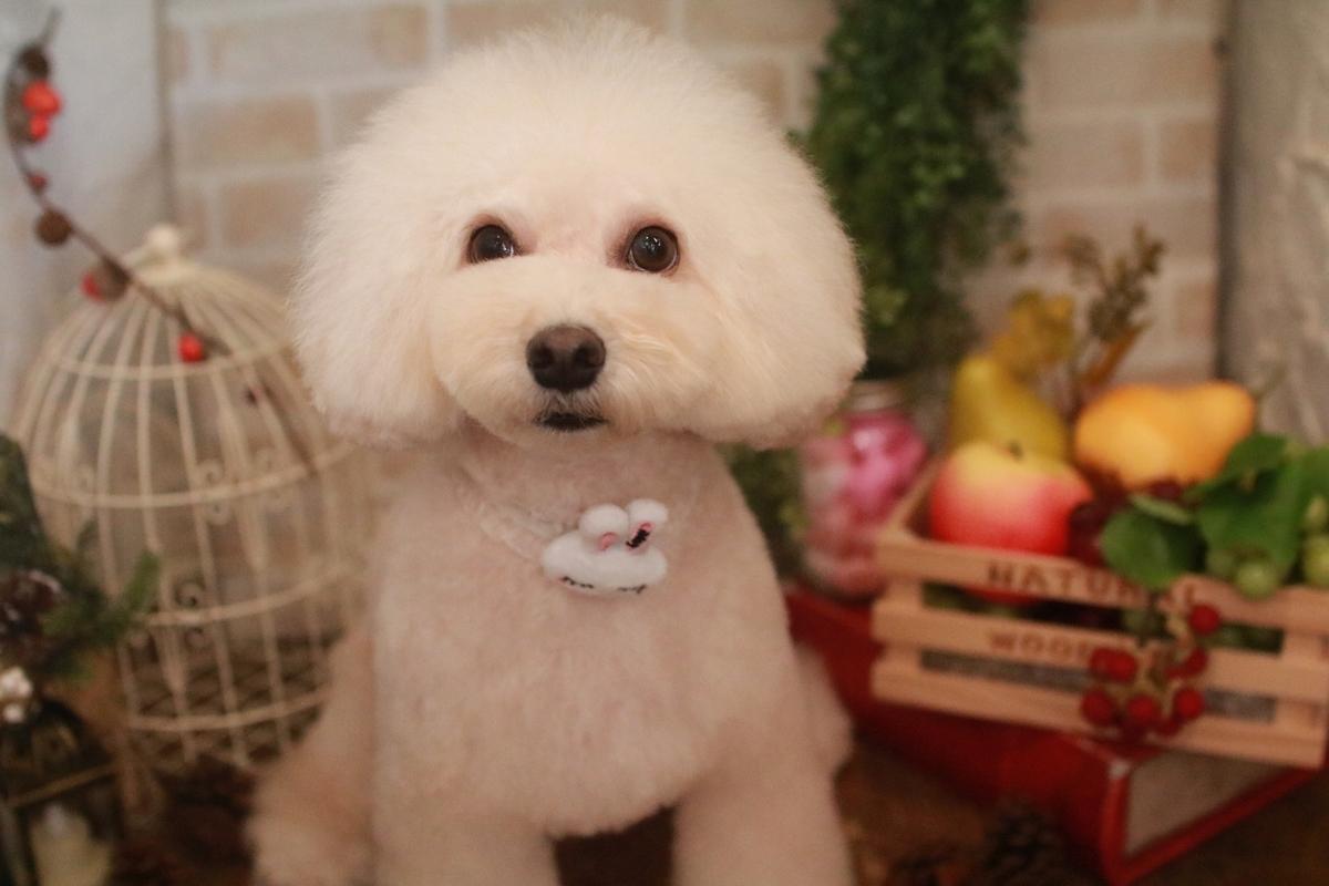 f:id:kotaro-dog:20210921001413j:plain