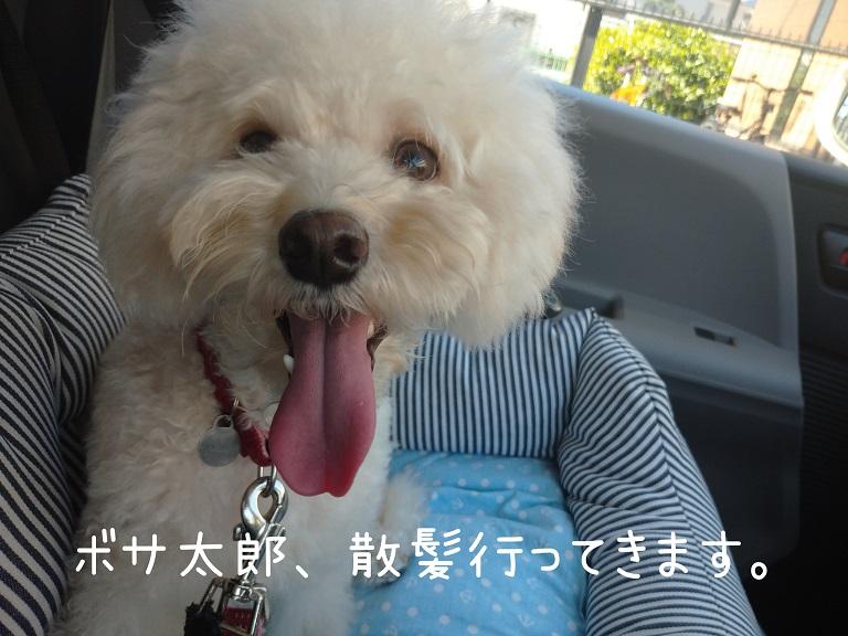 f:id:kotaro-dog:20210921001817j:plain