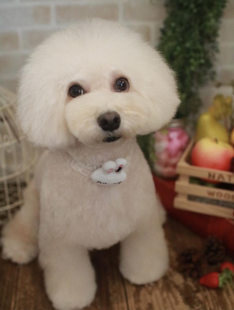 f:id:kotaro-dog:20210921004352j:plain