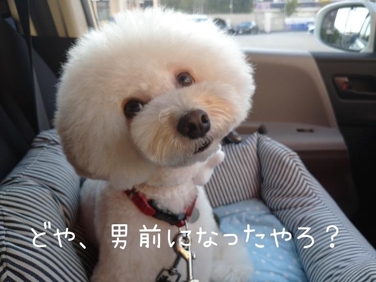 f:id:kotaro-dog:20210921004634j:plain