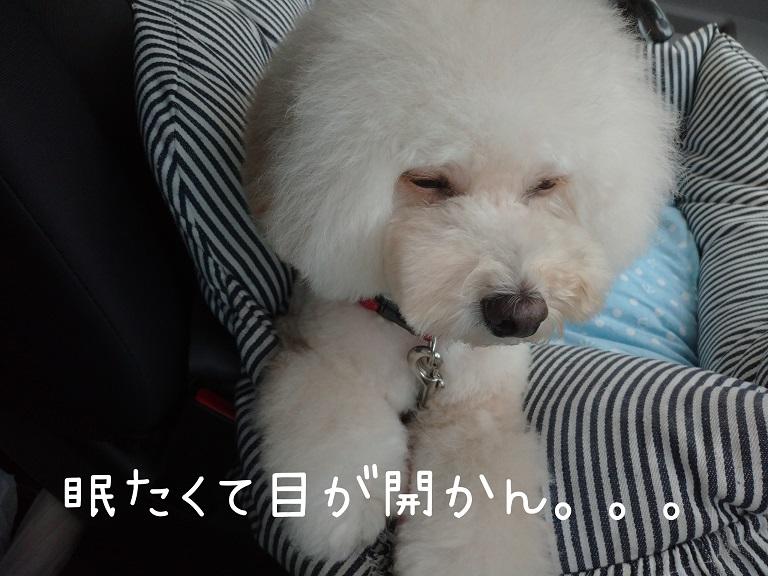 f:id:kotaro-dog:20210921004709j:plain