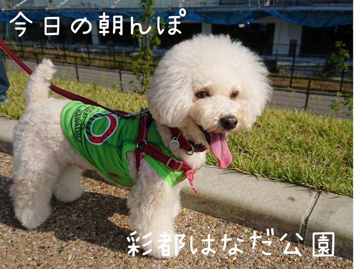 f:id:kotaro-dog:20210925195218j:plain