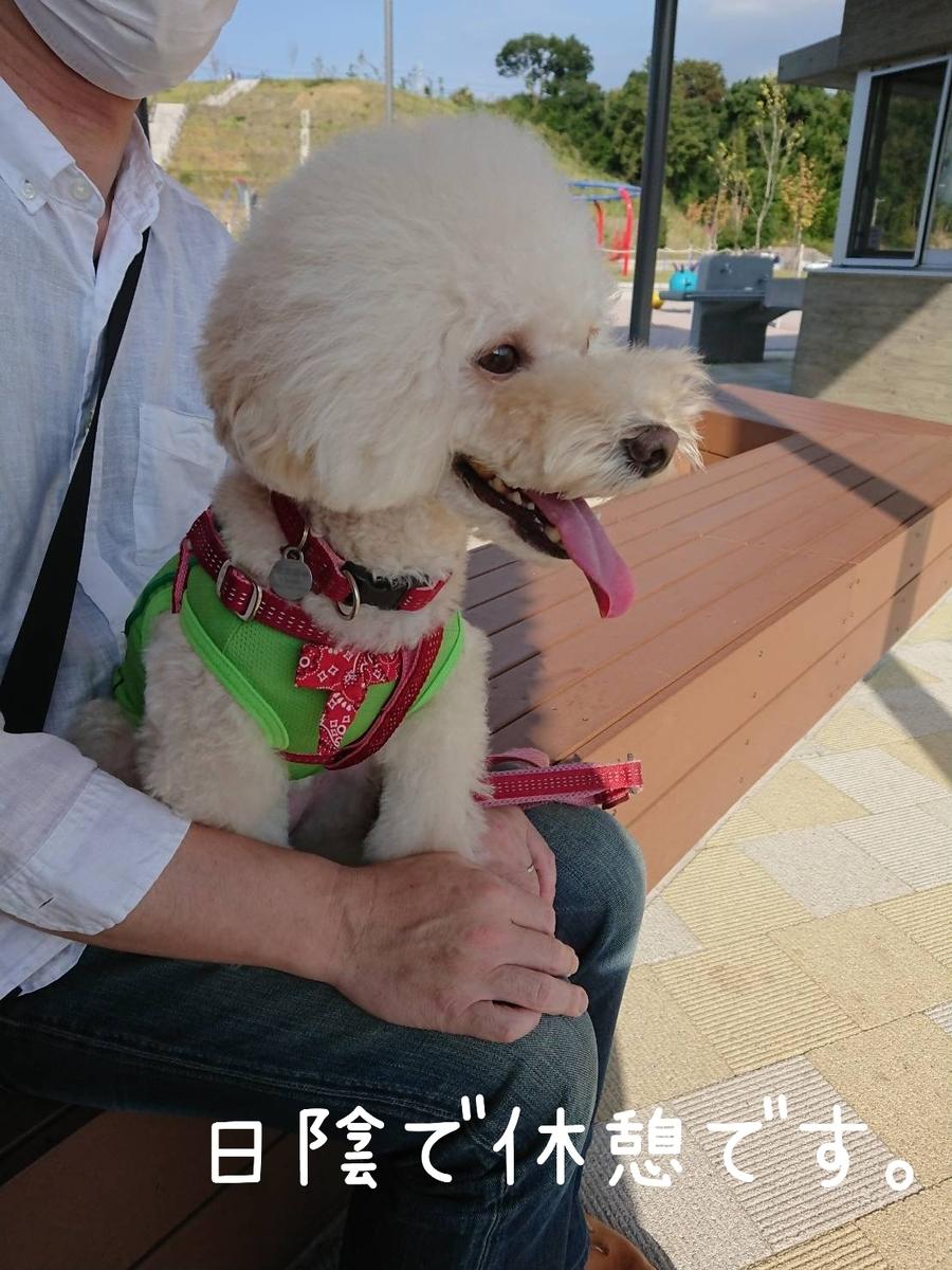 f:id:kotaro-dog:20210925212832j:plain