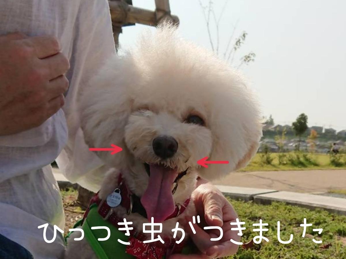 f:id:kotaro-dog:20210925213652j:plain