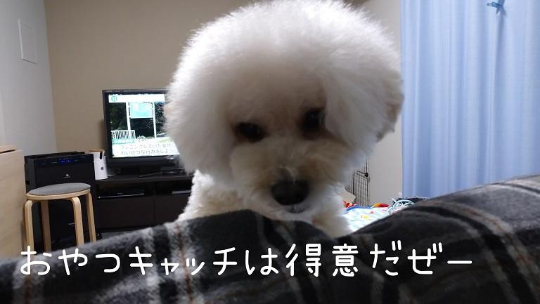 f:id:kotaro-dog:20210930002554j:plain