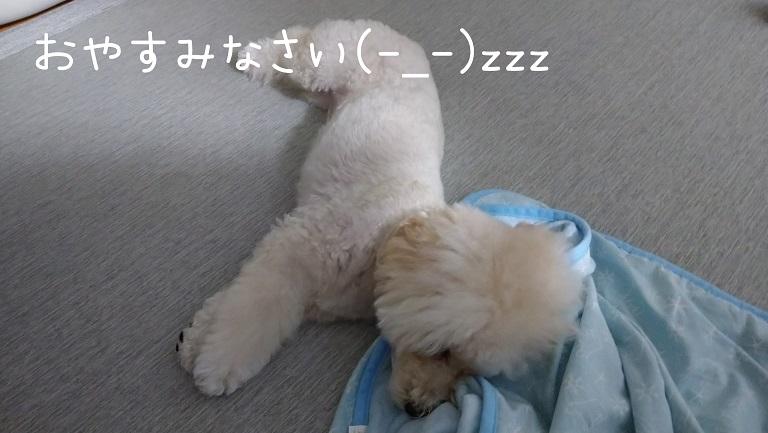 f:id:kotaro-dog:20210930004111j:plain
