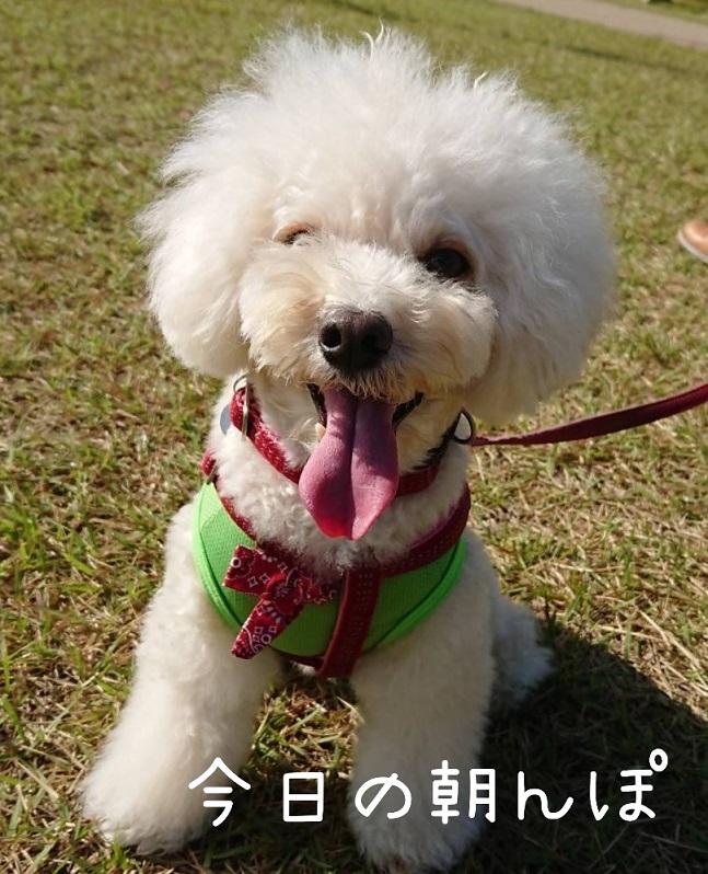 f:id:kotaro-dog:20211003125702j:plain