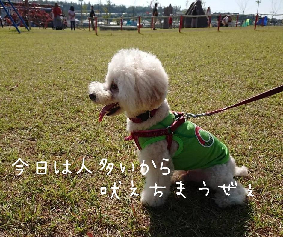f:id:kotaro-dog:20211003130416j:plain