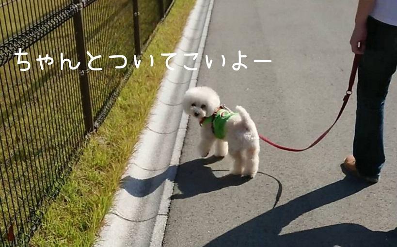 f:id:kotaro-dog:20211003130644j:plain