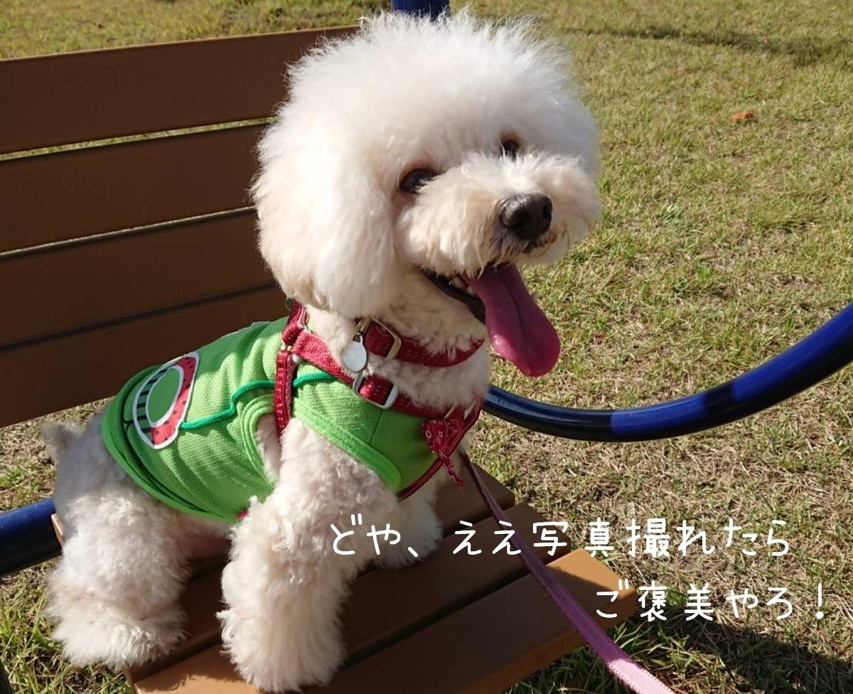 f:id:kotaro-dog:20211003131323j:plain