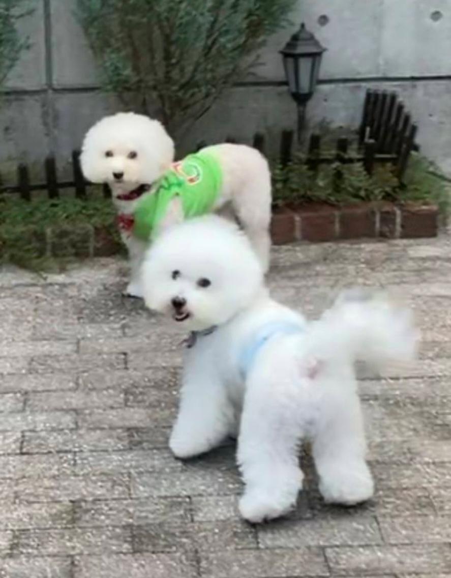 f:id:kotaro-dog:20211007012934j:plain