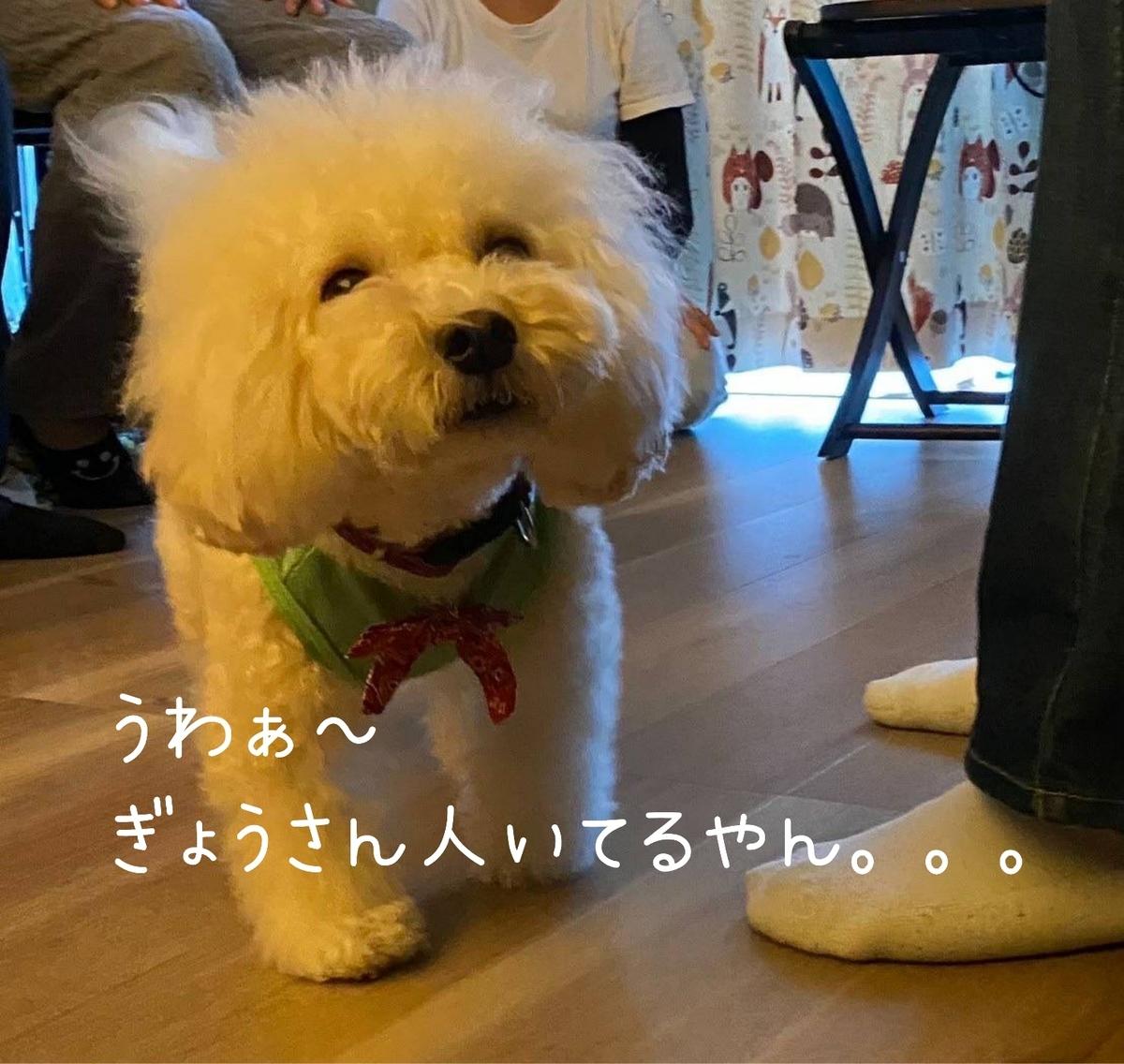 f:id:kotaro-dog:20211007013003j:plain