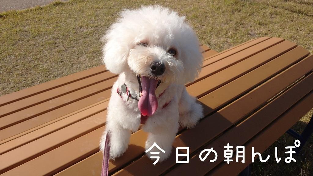 f:id:kotaro-dog:20211010134935j:plain