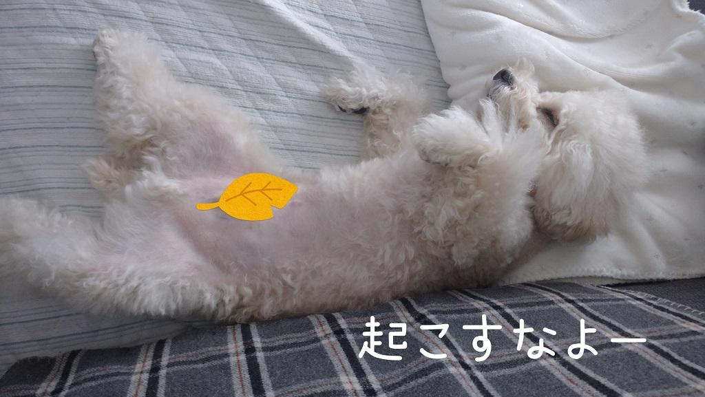 f:id:kotaro-dog:20211010144658j:plain