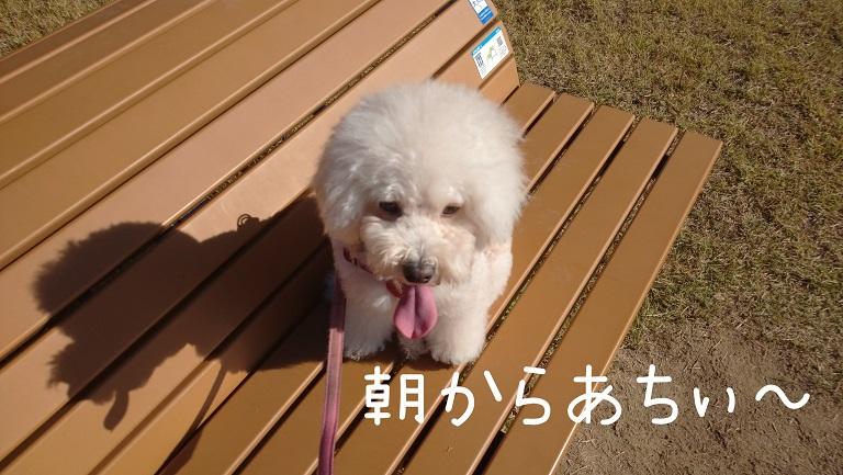 f:id:kotaro-dog:20211010163752j:plain