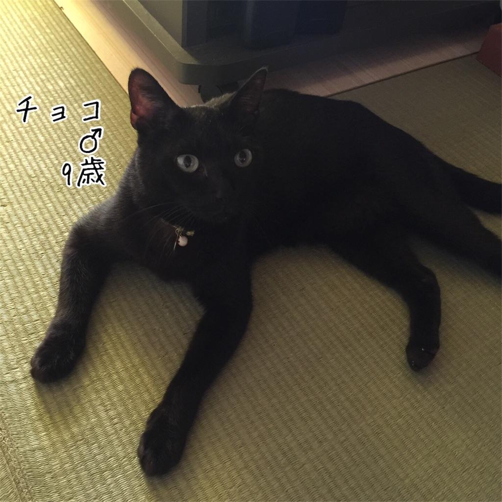 f:id:kotaro-nyan:20160811163441j:image