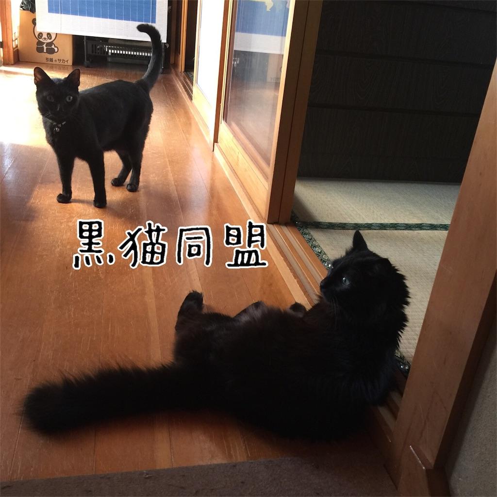 f:id:kotaro-nyan:20160813071239j:image