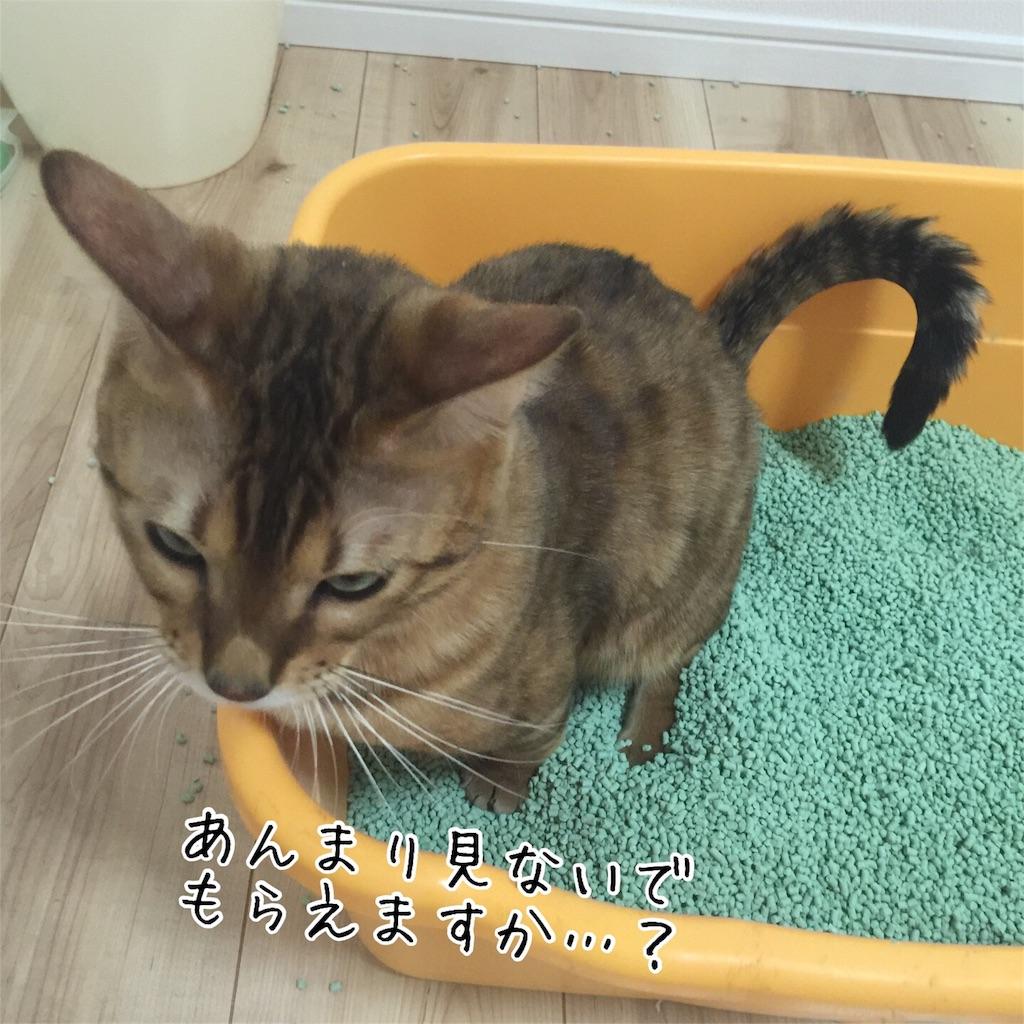 f:id:kotaro-nyan:20160823085559j:image