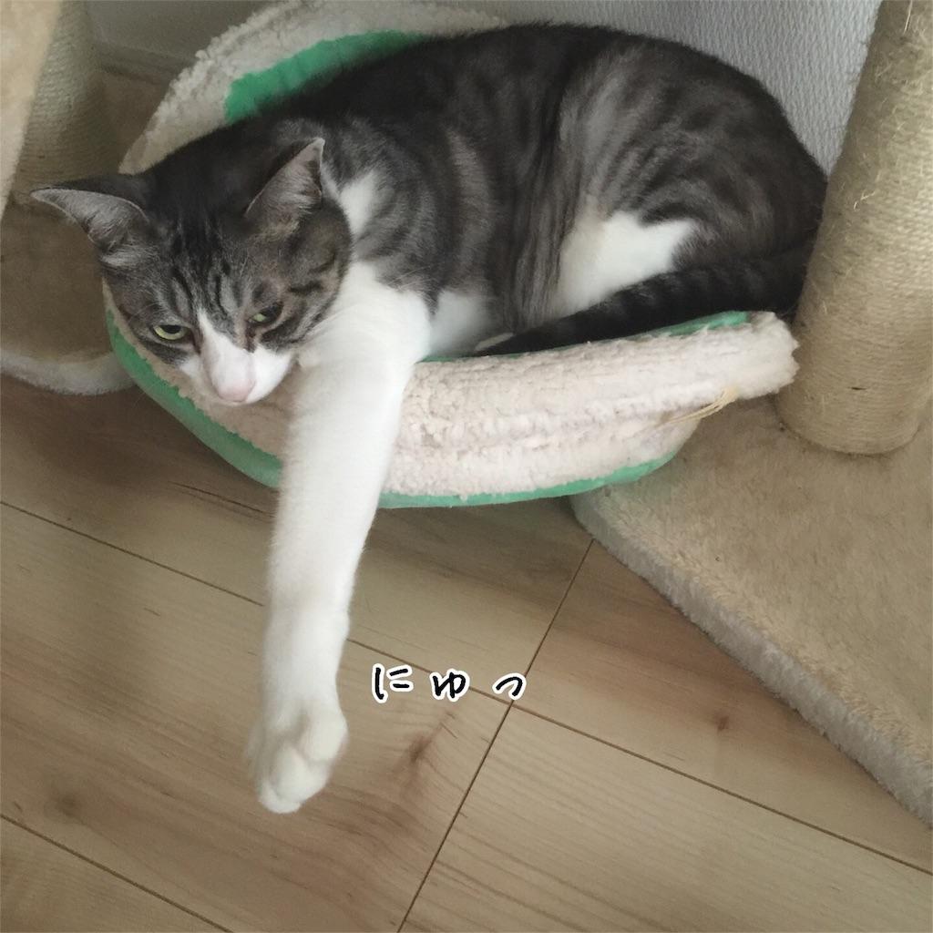 f:id:kotaro-nyan:20160824085752j:image