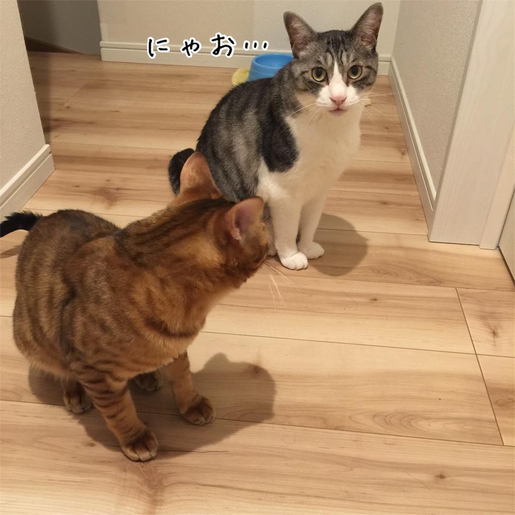 f:id:kotaro-nyan:20160917192410j:image