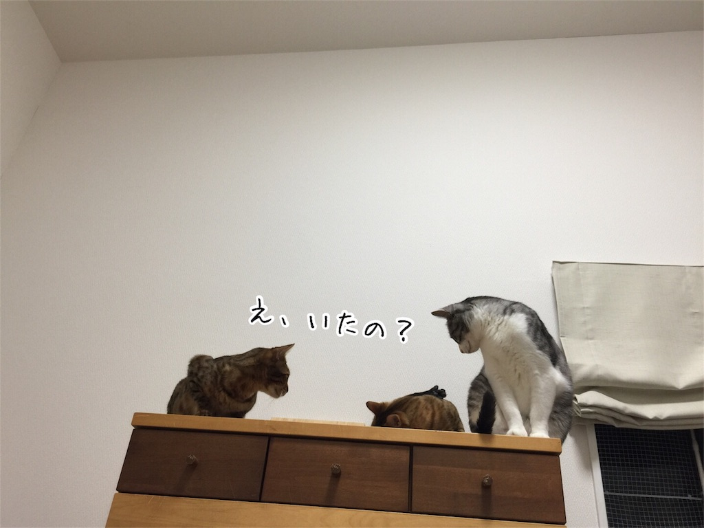 f:id:kotaro-nyan:20161010203018j:image